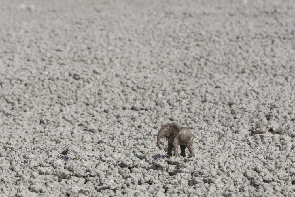 Elefanten har det lika torrt som humorn i detta blogginlägg