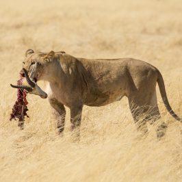 Namibia 4 – Etosha National Park bästa tipsen