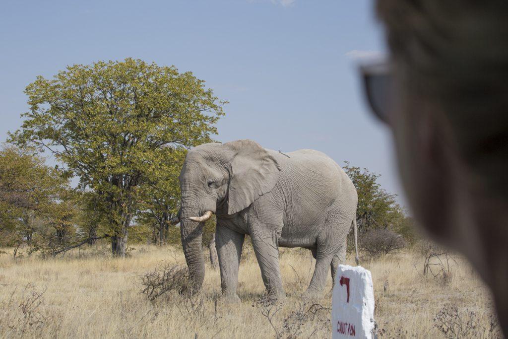 En häftiga känsla att komma så nära djuren, som den här elefanthannen