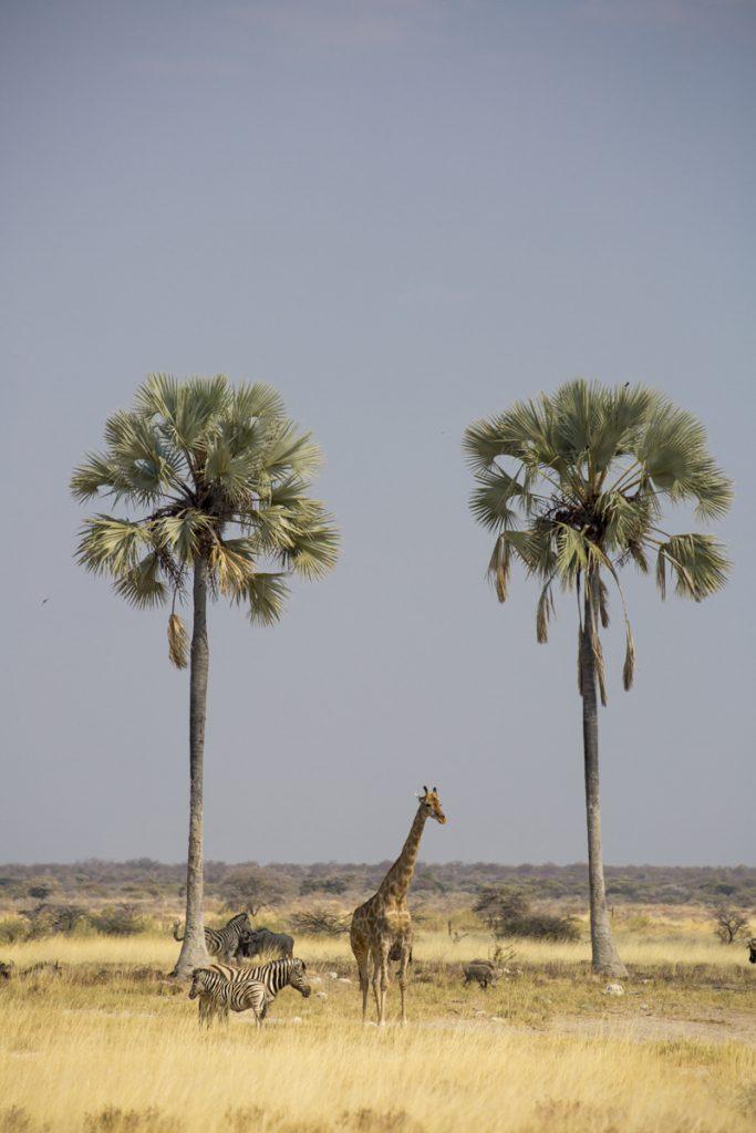 Vattenhålet Twee Palms