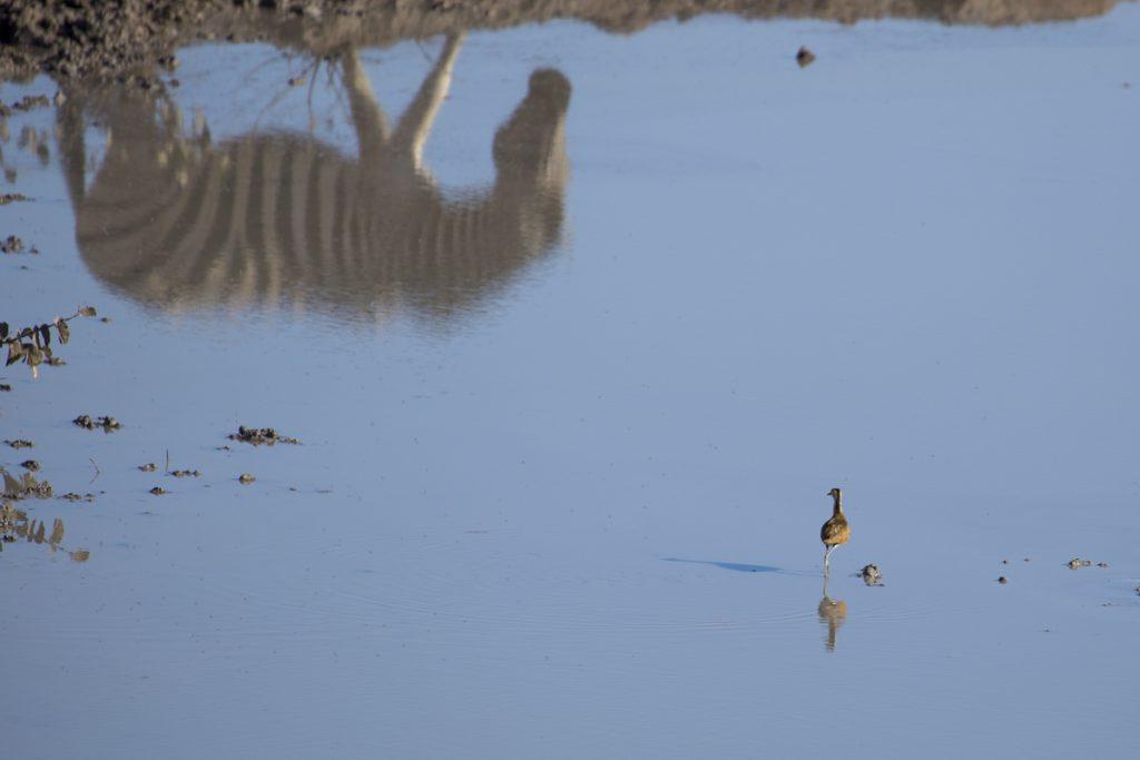 Ylva hittar en fågel i den leriga vattenpölen