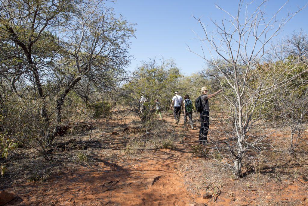 I fyra timmar vandrar vi omkring på Waterberg och lär oss massor om Namibias djur och växtliv