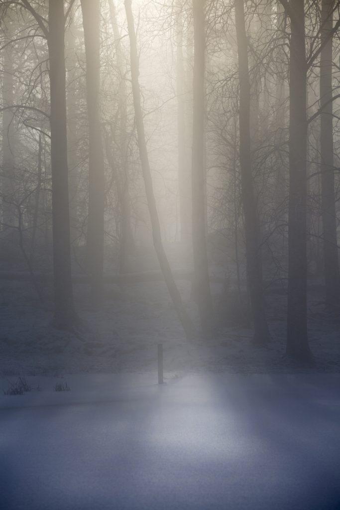 Solstrålar i dimman i skogen