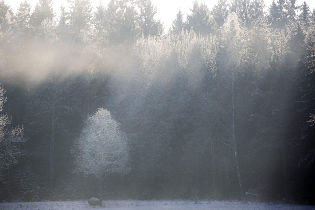 solstrålar i dimman