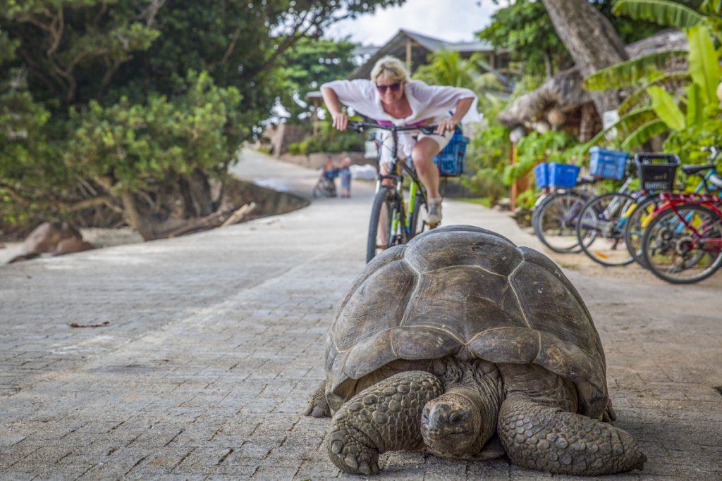 Kapplöpning med sköldpadda