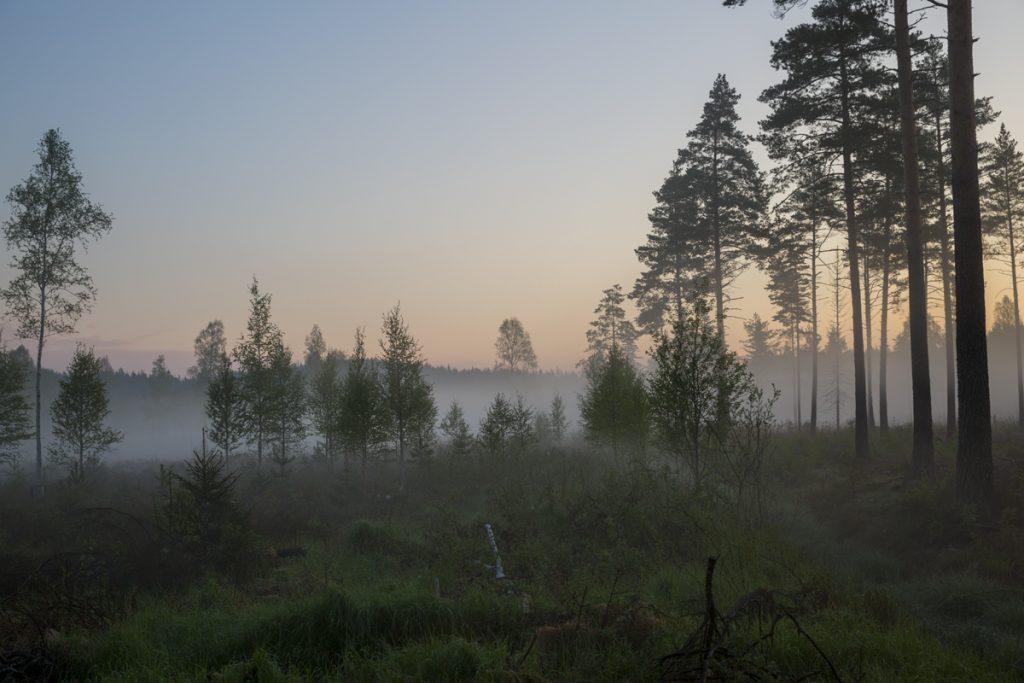 Strax innan solen hittade över trädtopparna