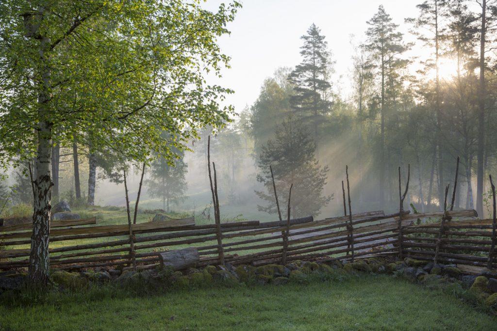 Gärdesgården blir vackert belyst av solens första strålar genom dimman