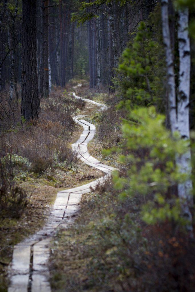 Kävsjön runt går mest genom skog