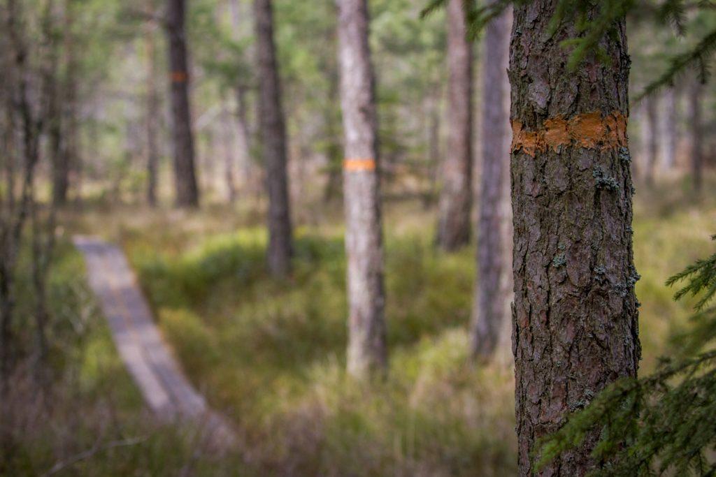 Många km spänger och tydligt markerade leder i skogen runt Kävsjön