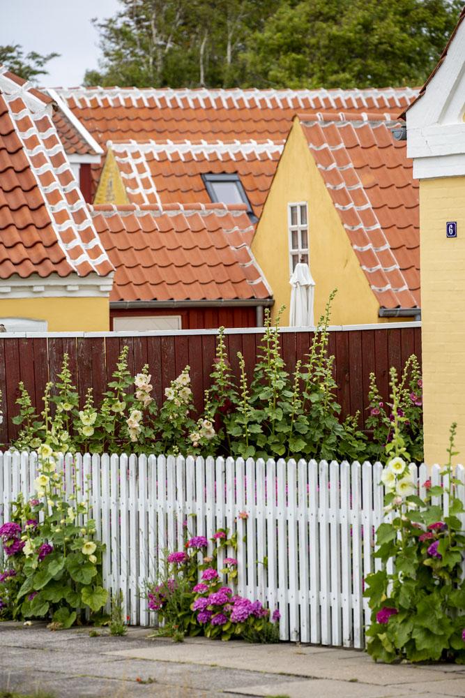 Skagen stad, gula hus med stockrosor