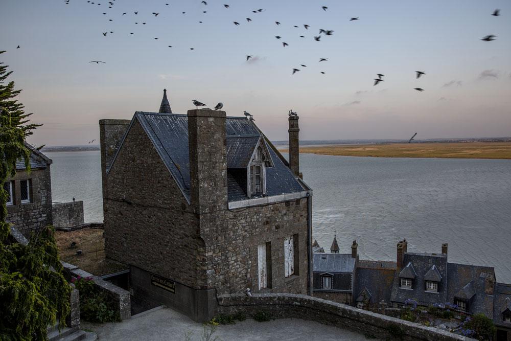 Mont Saint-Michel med fåglar i skymningen